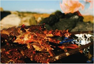 Justin Bonello's strandloper crayfish on the braai recipe, National Braai Day