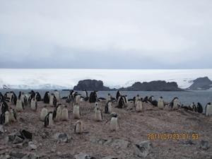 Penguins Thrived in Antarctica During Little Ice Age
