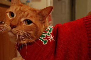 These 26 Cats Wearing Christmas Sweaters Will Put A Smile On Your Face image Christmas Sweater Wearing Cat