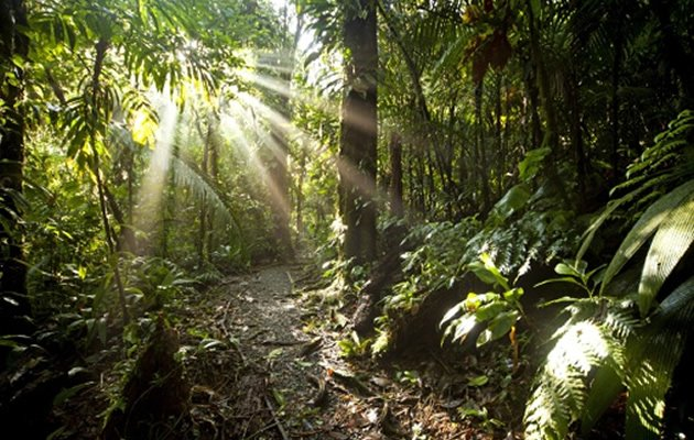 Sunrays in the dense jungle of the Braulio Carrillo National Park, Costa Rica, Central America