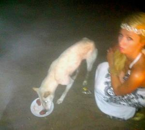 Paris Hilton Feeds Stray Dog Filet Mignon
