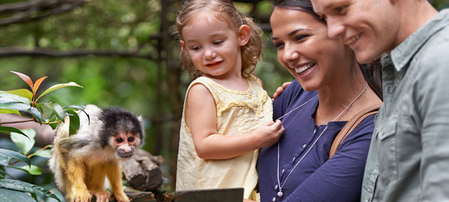 Mass Zoo Data Breaches Bring Consumer Safety to Light