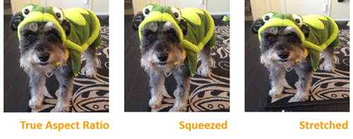 Rufus dressed as a turtle. Shows original true aspect ratio versus distorted images.