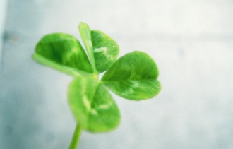 5 Ways the 'Lean' Approach Can Help Your Startup Grow
