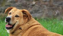 過胖容易影響健康!飼主須正視寵物肥胖問題