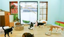 這些生命裝在貓的形狀裡面——專訪拼圖喵創辦人陳人祥