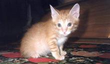 【Yahoo論壇/蔡里長】我對不起一隻貓