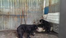 (0923)屏東兩隻私人合法飼養台灣黑熊送台北動物園收養