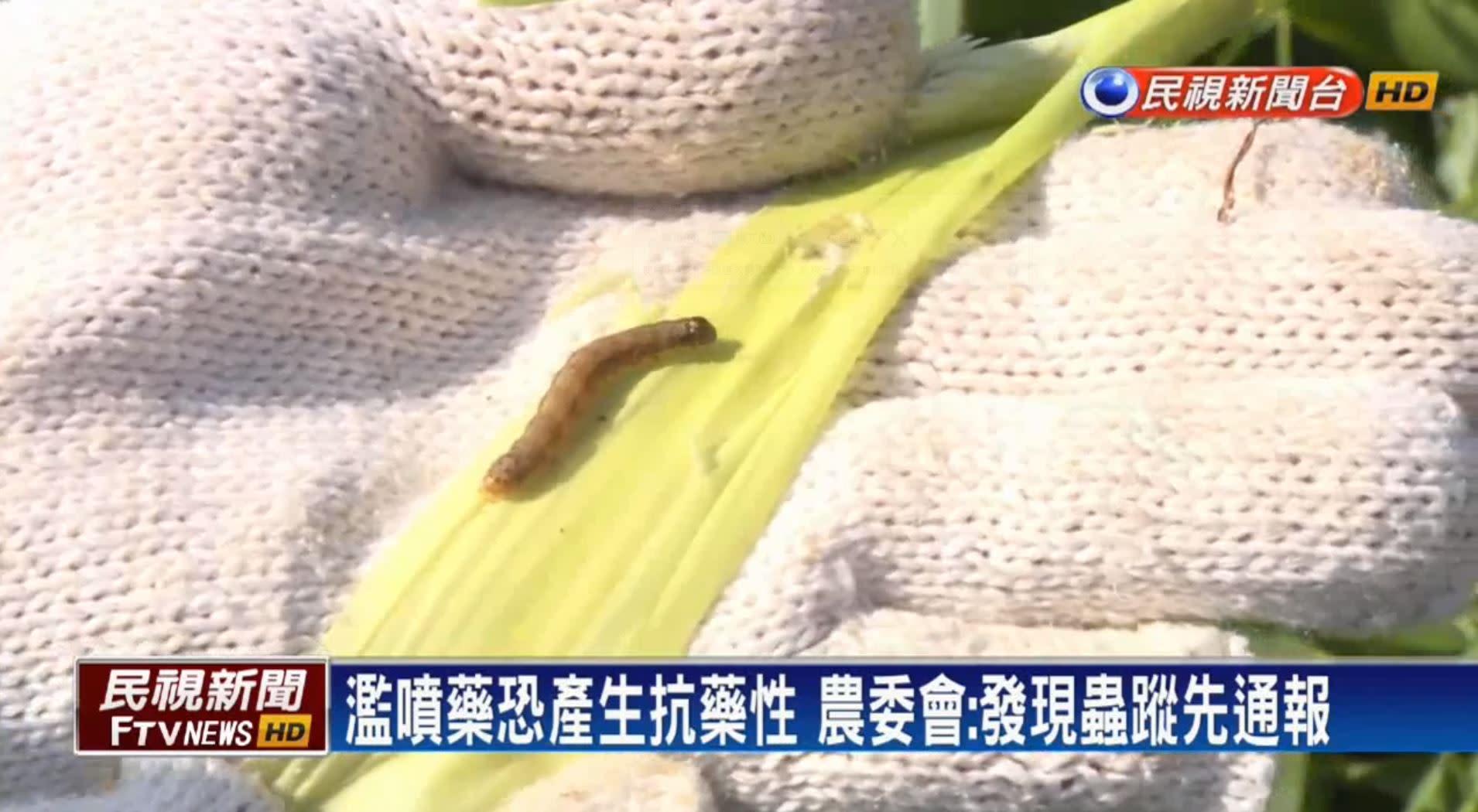 秋行軍蟲疑現第二代成蟲 農委會將強制噴藥