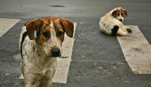 該被掃除的畸零生命?──談現代性與城市動物