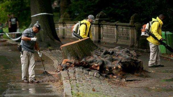 PHOTO: Central Park workers clean up around an area where a massive tree came down injuring a mother and her three young children, Aug. 15, 2017, in New York City. (Spencer Platt/Getty Images, FILE)