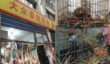 中國野味市場重新開放!澳洲總理批WHO「坐視不理」:難以理解
