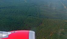雨林浩劫 國際民航組織想用棕櫚油減碳 萬人連署反對