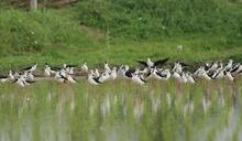 飛向幸福「鳥」托邦 台北賞鳥博覽會周末展翅關渡