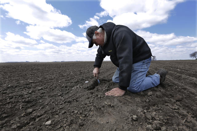 Central Illinois corn and soybean farmer Garry Niemeyer inspects the soil temperature and the sprouting of corn seeds he planted earlier as a test, Tuesday, April 15, 2014, in Auburn, Ill. Farmers eager to fire up the combines and get their corn crops in the ground are being foiled by an uncooperative spring after a long winter. The U.S. Department of Agriculture expects farmers to now launch into full-scale planting at the end of this month, later than usual. (AP Photo/Seth Perlman)