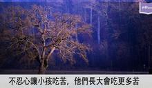 澆冷水的樹才會長大 夠愛又夠狠 教養才完整