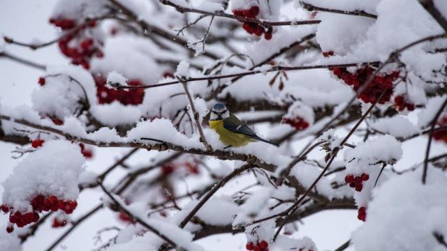 In den Alpen schneit es zum Jahreswechesl ausgiebig. Foto: Stefan Puchner
