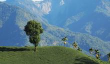 土地的滋味 茶山保育,生態永續