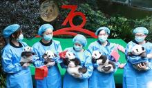 龍緣之:大貓熊可愛外衣下的文化、政治與經濟符號