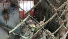 動物保護法應加強防範組織內的動物虐待