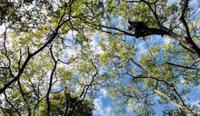 站上高處的視角 為樹服務的攀樹師