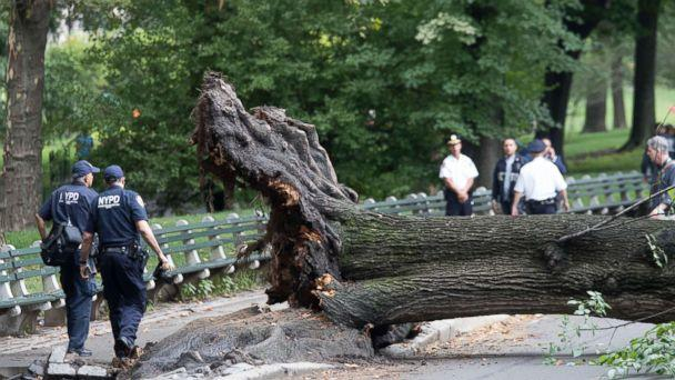 PHOTO: Police officers inspect an area where a massive tree came down injuring a mother and her three young children, Aug. 15, 2017, in New York City. (Spencer Platt/Getty Images)