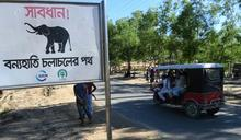 孟加拉野象 殺害4洛興雅難民