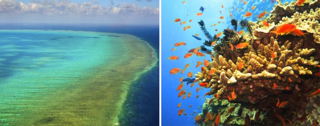 Great Barrier Reef at tipping point: scientists (Thinkstock)
