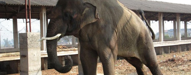 Photos reveal elephant's awful living conditions