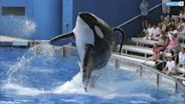 """'Blackfish' Director Talks SeaWorld Revenue Drop: """"People Are Truly Willing To Change Ethically"""""""