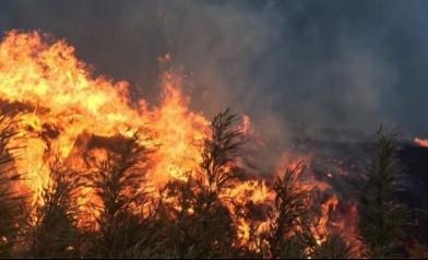 一場森林大火 燒出驚人真相
