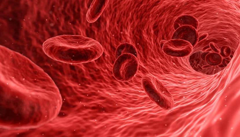 吃「紅蚯蚓」清血栓比納豆、紅麴更有效? 來看專家怎麼說...