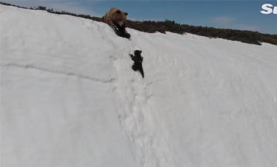 瘋傳小熊爬雪山 真相曝光
