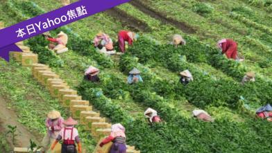 震撼真相「台北人都毒不死」
